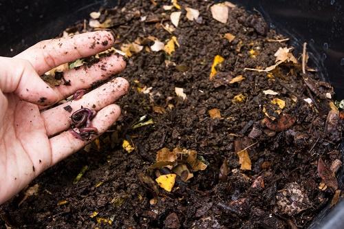 Xử lý rác bằng nuôi giun quế vừa hiệu quả mà lại mang lại kinh tế