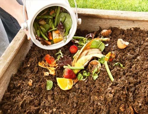 Ủ rác hữu cơ làm phân bón cho cây